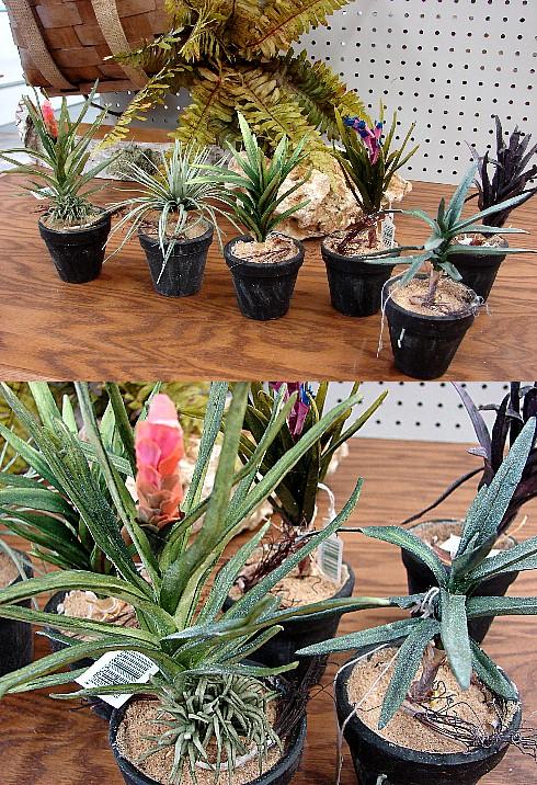 6 Assorted Tillandsia Air Plants in Miniature Pots Window Sill Decor, Moose-R-Us.Com Log Cabin Decor