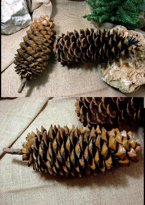 Huge Pine Cone Sugar Pinecone, Moose-R-Us.Com Log Cabin Decor