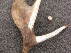 Antler Decor Accessories Deer Elk Moose