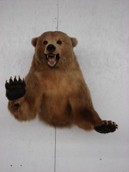 Real Taxidermy Kodiak Brown Grizzly Bear 3/4 Wall Mount, Moose-R-Us.Com Log Cabin Decor